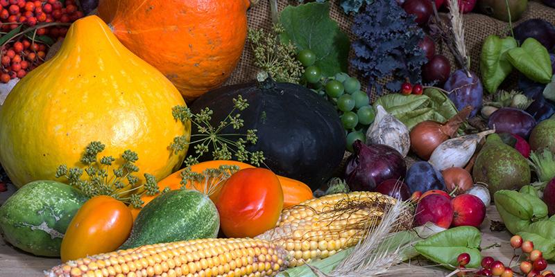 Ernährungstherapie – Ausbildung zum Ernährungstherapeuten